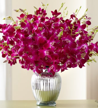 Exotic Breeze? Orchids + Free Vase