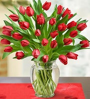 Tulips for your Love