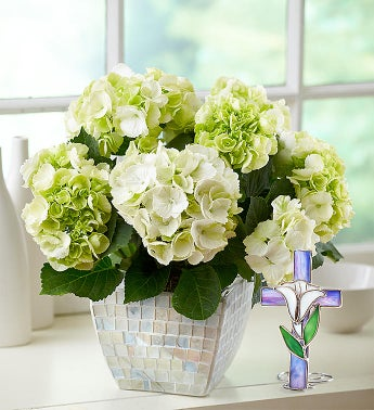 Bountiful Blessings Hydrangea - 1-800-Flowers