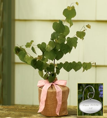 Red Bud Tree with Personalized Plaque