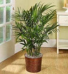 Large House Plants Tall House Plants