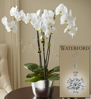 Swarovski Silver Celebration Orchid