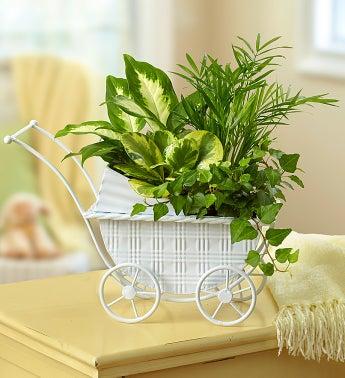 Baby Stroller Garden - 1-800-Flowers