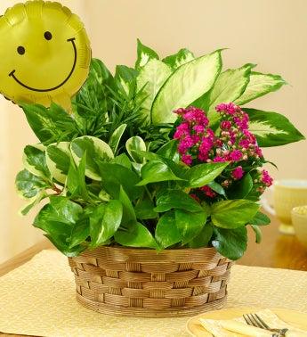 Blooming Dish Garden - Blooming Dish Garden with Smiley B...