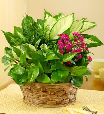 Blooming Dish Garden - 1-800-Flowers