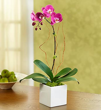 Majestic Orchid - 1-800-Flowers