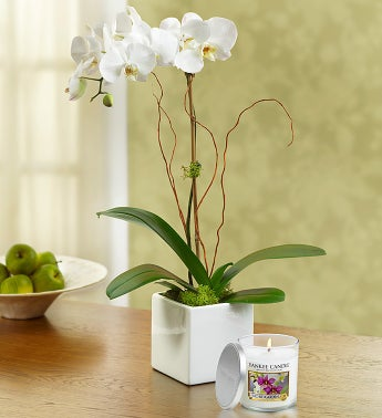 White Majestic Orchid with Yankee Candle