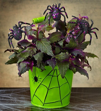 Best Halloween Flower Arrangements- Spooky Spider Plant