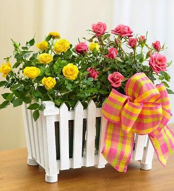 Spring Splendor Rose Garden - Charming Rose Garden-Large ...