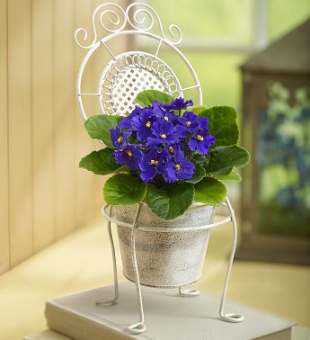 Labor Day Celebration - Lovely Chair of Blooms
