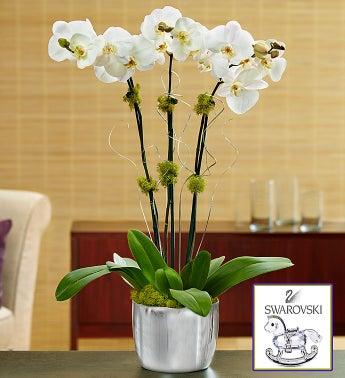 Swarovski� Phalaenopsis Orchid
