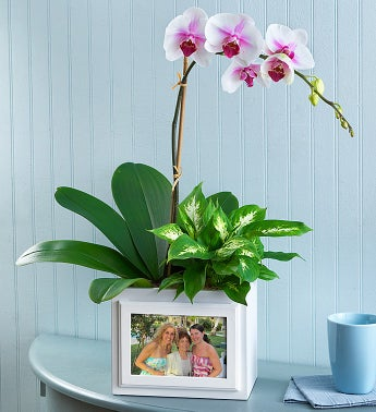 Keepsake Photo Box Garden - Orchid Garden - 1-800-Flowers