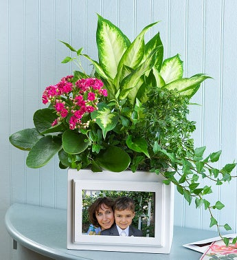 Keepsake Photo Box Garden - Tropical Garden - 1-800-Flowers