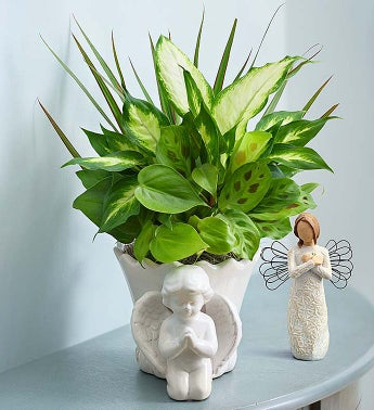Praying Angel Dish Garden - Praying Angel Dish Garden + R...