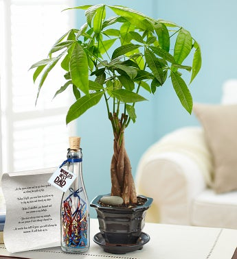 Money Tree for Dad