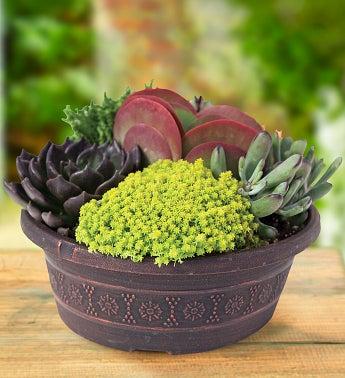 Proven Winners Savvy Succulents Garden - 1-800-Flowers