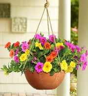 Proven Winners� Candyland Dish Garden