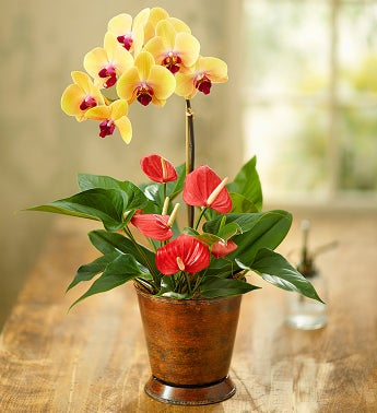 Stunning Orchid with Anthurium - 1-800-Flowers