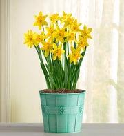 Delightful Daffodil + Free Gloves