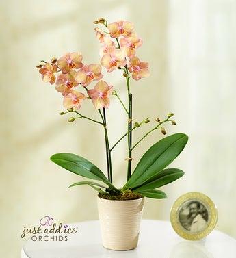 Artistic Splendor Orchid - 1-800-Flowers
