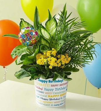 Birthday Wishes Dish Garden - 1-800-Flowers