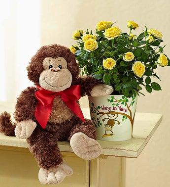 Hang in There Rose Plant - Hang in There Rose Plant & Mon...