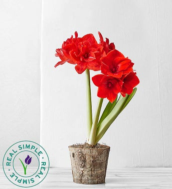 Plant of the Month Club - 3 Months ($ per delivery)