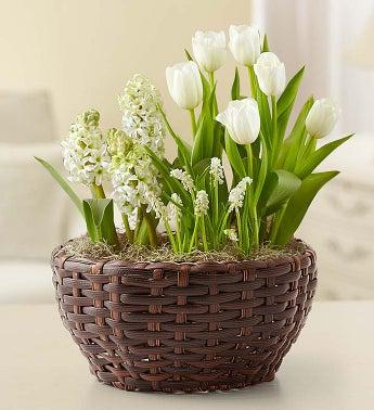 Sentimental Garden for Sympathy - 1-800-Flowers