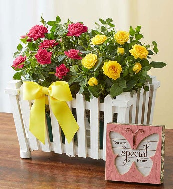 image of Charming Rose Garden