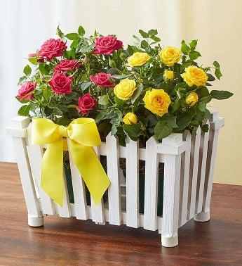 Charming Rose Garden - Large - 1-800-Flowers
