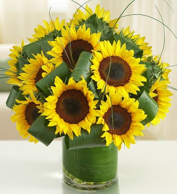 Sun-Sational Sunflowers