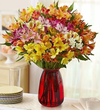 Peruvian Lilies - 100 Blooms with Red Vase - 1-800-Flowers