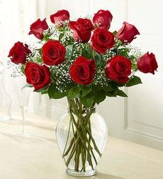 Rose Elegance Premium Long Stem Red Roses - One Dozen Red Roses