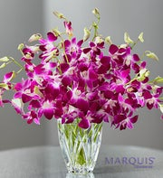 Luxurious Exotic Breeze? Orchids