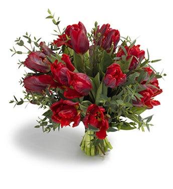 Roccoco Tulips
