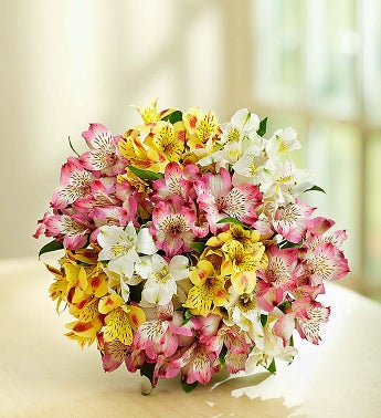 Spring Peruvian Lilies, 50-100 Blooms - 50 Blooms Bouquet...