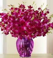 Exotic Breeze? Orchids, 15-30 Stems  + Free Vase
