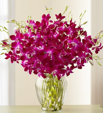 Exotic Breeze Orchids 15-30 stems + Free Vase - Birthday Flowers for Her