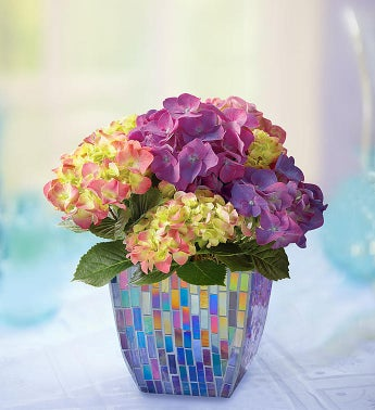 1-800-Flowers.com With Love Hydrangea - 1-800-Flowers