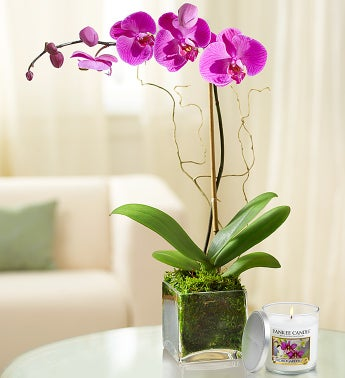 Phalaenopsis Orchid with Yankee Candle