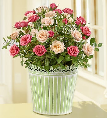 Summer Country Rose - 1800flowers promotion
