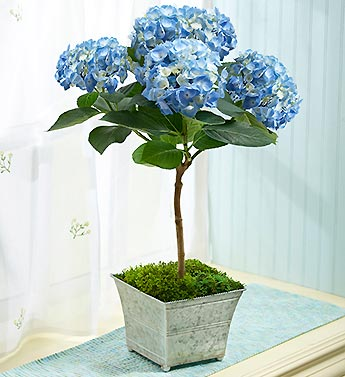 Happy Hydrangea Topiary