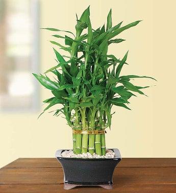 1-800-Flowers.com Pyramid Bamboo - 2 Layer - Pyramid Bamb...