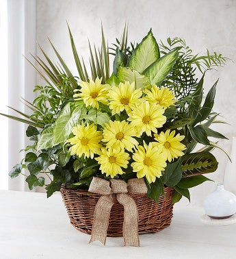 Dish Garden with Fresh Cut Flowers - Large - 1-800-Flowers