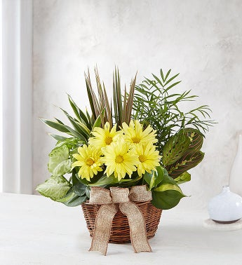 Dish Garden with Fresh Cut Flowers - Small - 1-800-Flowers