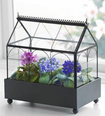 Violet Terrarium - 1-800-Flowers