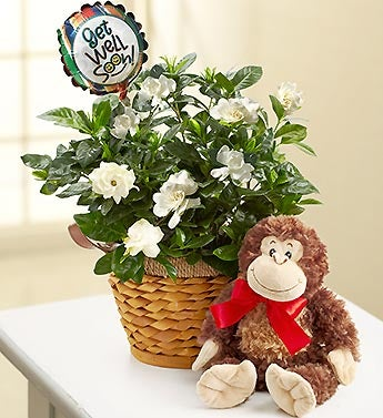 Get Well Gardenia with Monkey