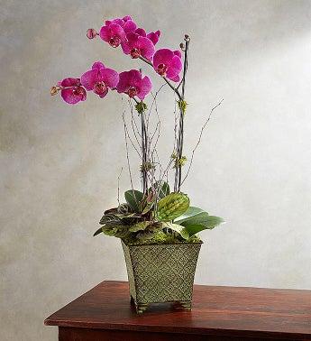 1-800-Flowers.com Alluring Magenta Orchid Garden - 1-800-...