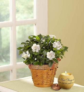 Cherished Gardenia - Small with Candle - 1-800-Flowers