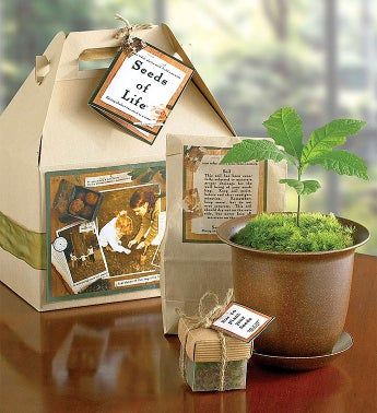 1-800-Flowers.com Plants - Seeds of Life Tree Kit - 1-800...